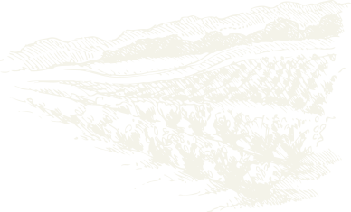 VL - illustration